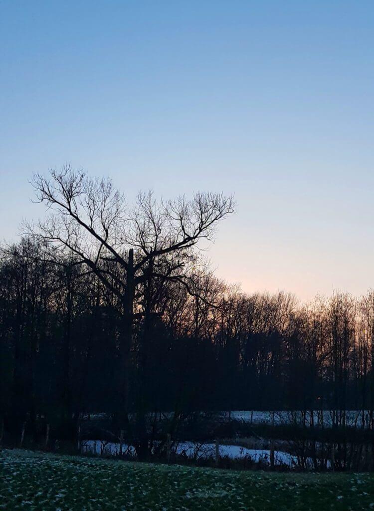 Blick in die Natur, Erlenhof, Ahrensburg – Foto: Nicole Stroschein