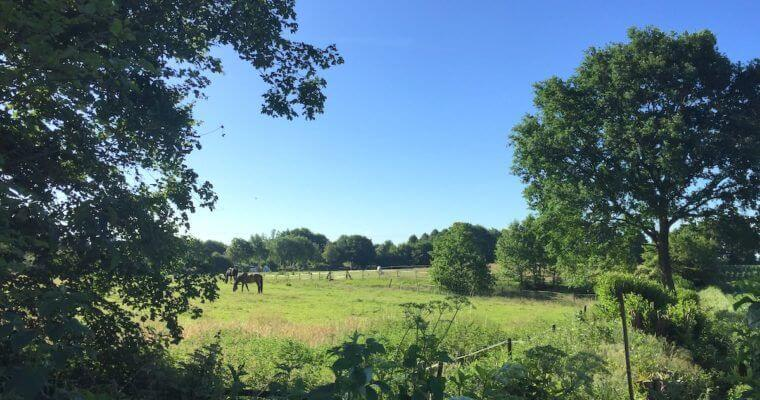 Liebeserklärung: 5 Gründe, warum ich Ahrensburg so mag