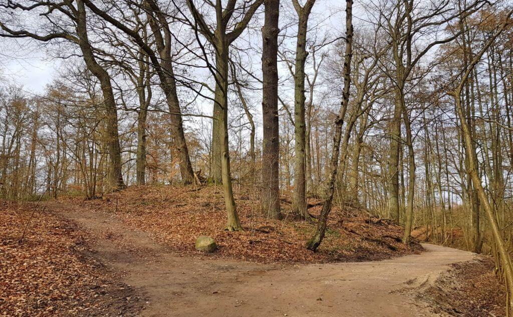 Burg Arnesvelde im Forst Hagen – Foto: Nicole Stroschein