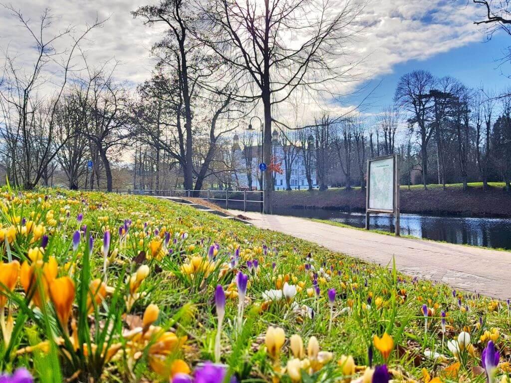 Krokusse, Schloss Ahrensburg – Foto: Nicole Stroschein