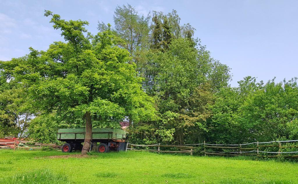 Weide in Ahrensfelde – Foto: Nicole Stroschein