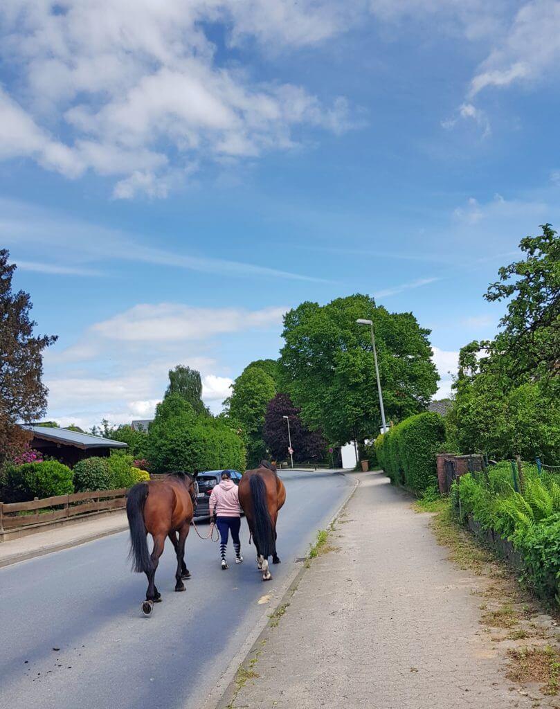 Pferde in Ahrensfelde