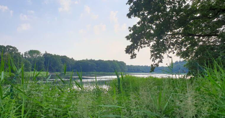 Rund um den Bredenbeker Teich