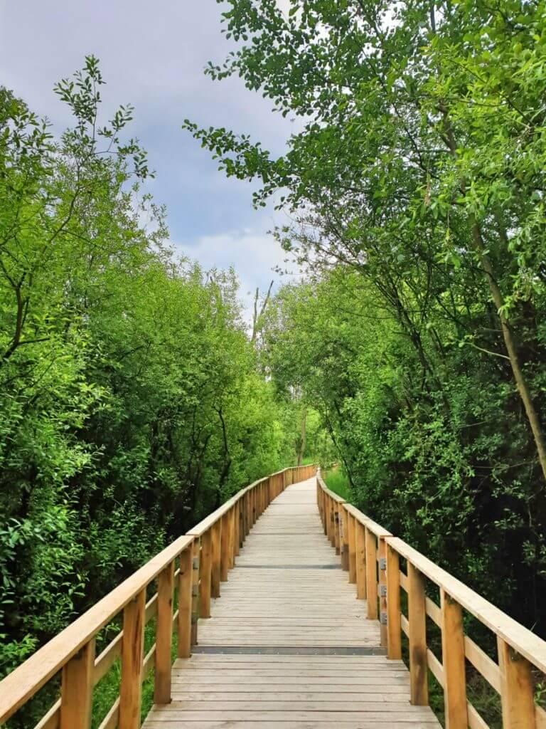Der Moorwanderweg und die Brücke im Sommer –Foto: Nicole Stroschein