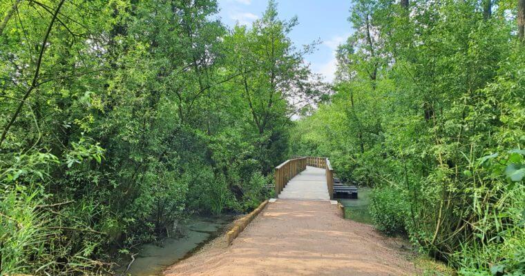 Moorwanderweg im Sommer –norddeutscher Dschungel
