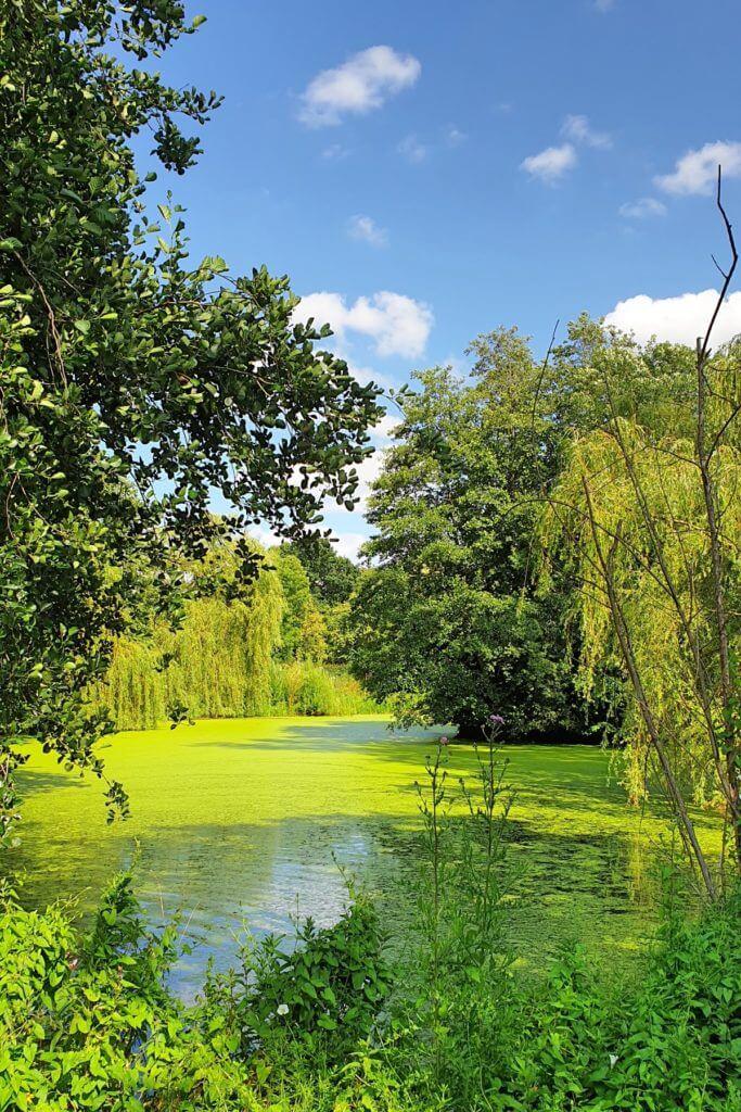 Wunderschön eingerahmt von Bäumen – Foto: Nicole Stroschein