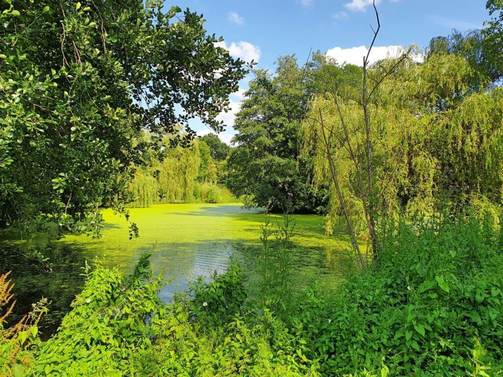Der Teich im Aalfang Park – Foto: Nicole Stroschein