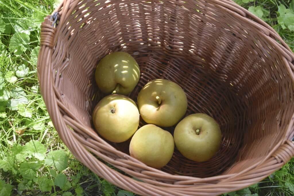 Ahrensburger Äpfel für einen leckeren Kuchen – Foto: Nicole Stroschein