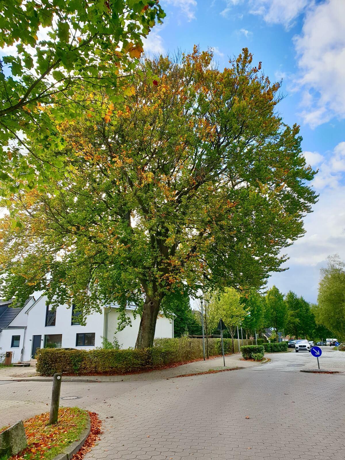 Kreisverkehr Dänenweg / Brauner Hirsch, Ahrensburg – Foto: Nicole Schmidt
