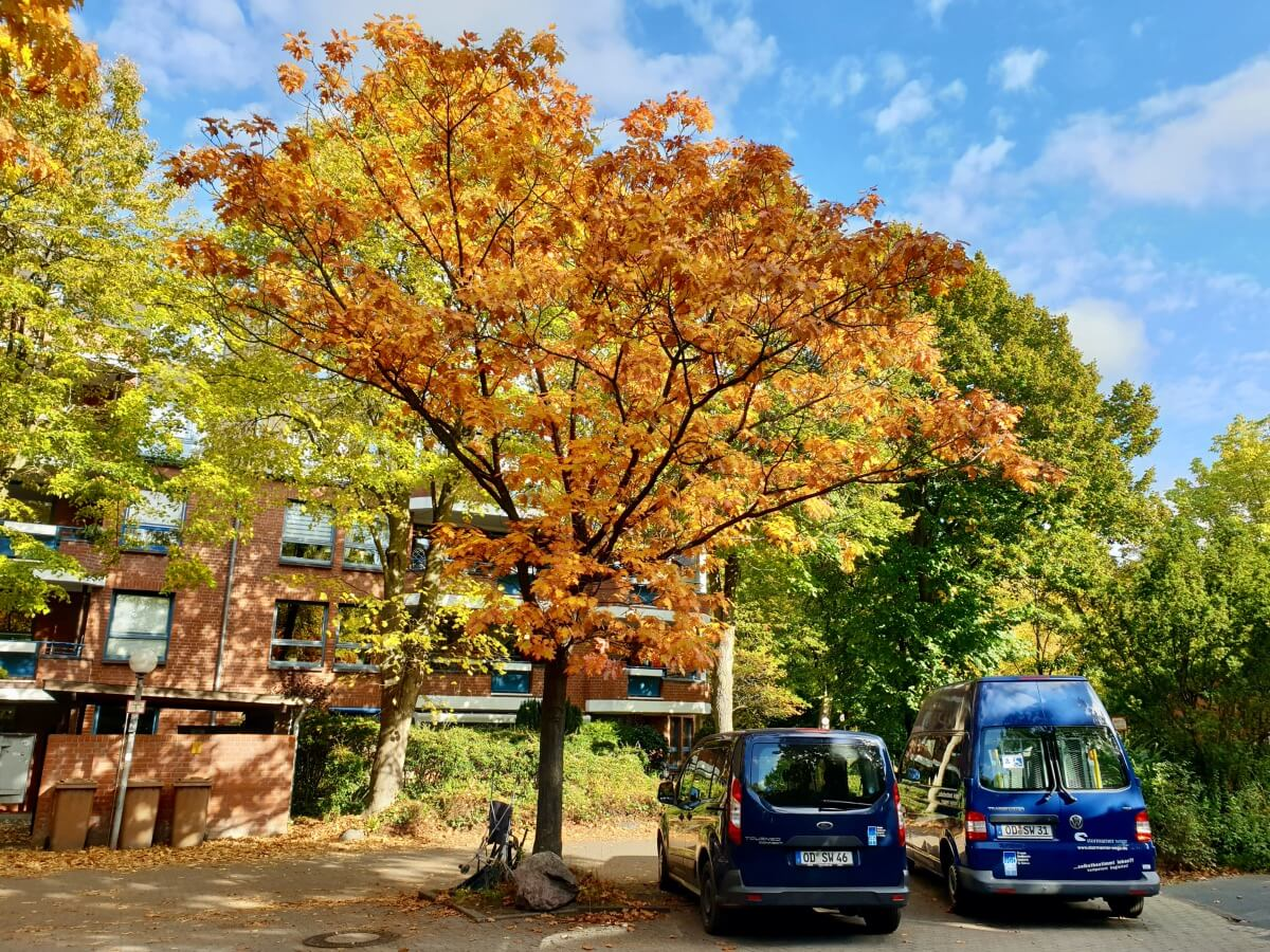 Der Helgolandring im Herbst –Foto: Nicole Schmidt