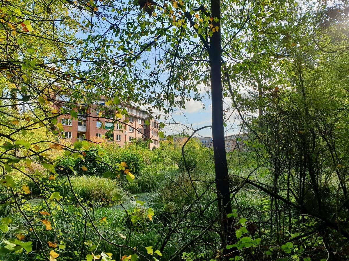 Wohnblöcke und wilde Natur im Gartenholz – Foto: Nicole Schmidt
