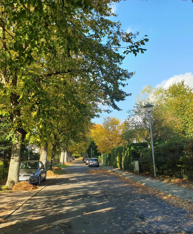 Die Blücherallee in Ahrensburg – Foto: Nicole Schmidt