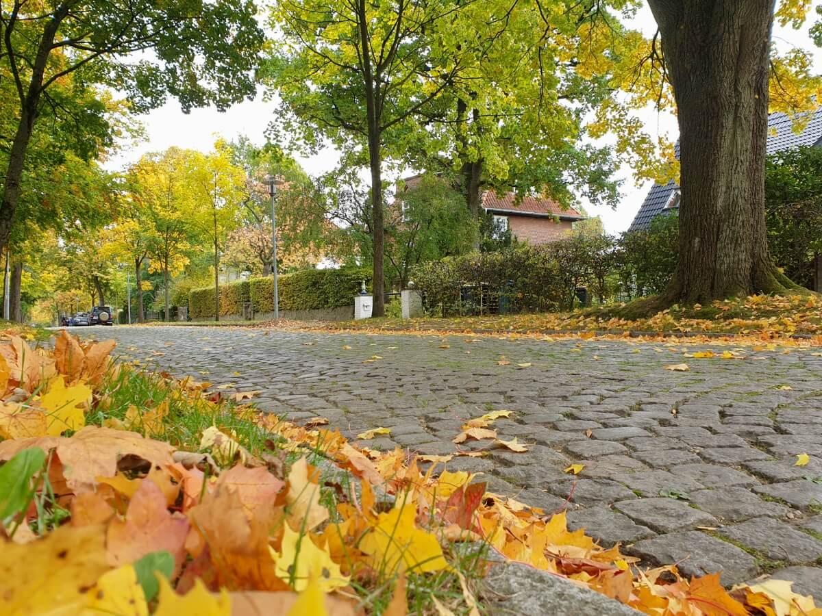 Kopfsteinpflaster in der Moltkeallee in Ahrensburg – Foto: Nicole Schmidt