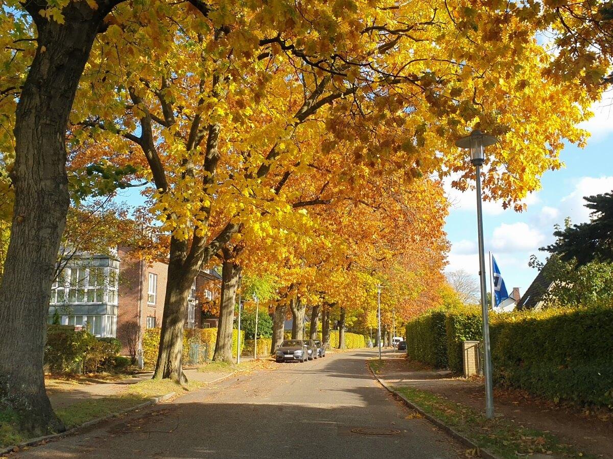 Die Parkallee in Ahrensburg –Foto: Nicole Schmidt