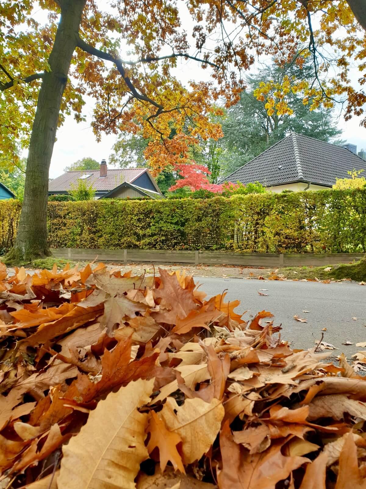 Herbstlaub in der Parkallee – Foto: Nicole Schmidt