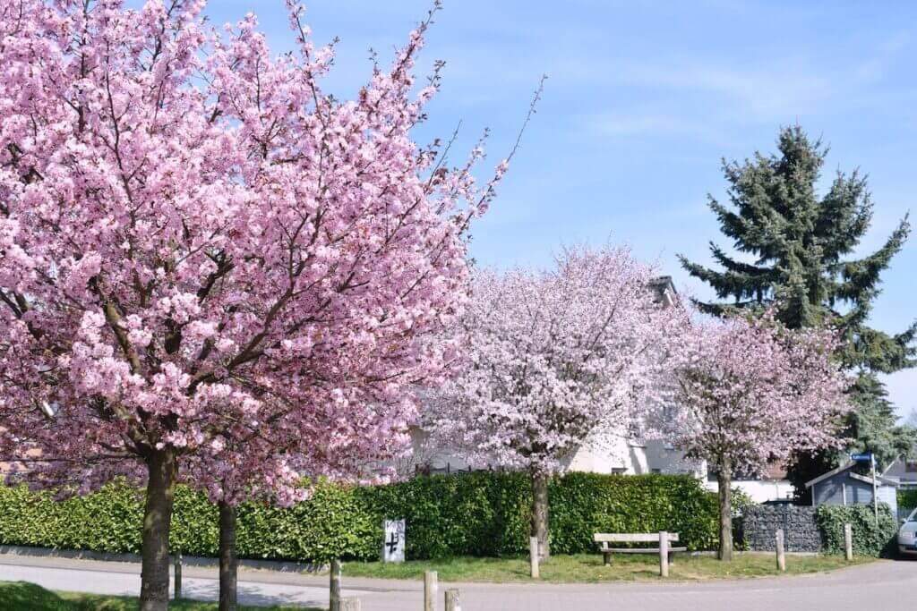 Lilienweg, Ahrensburg im Frühling –Foto: Nicole Schmidt