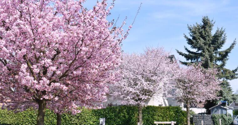 Frühling in Ahrensburg