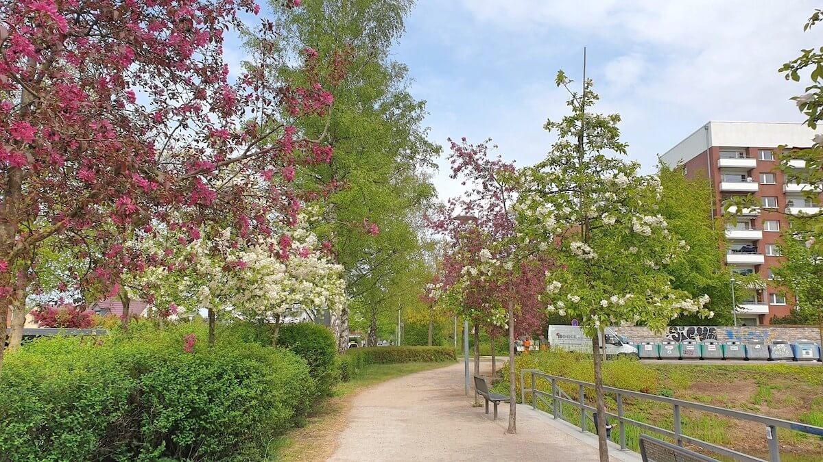 Rot-Weißer Frühling in Ahrensburg an der Friedensallee –Foto: Nicole Schmidt
