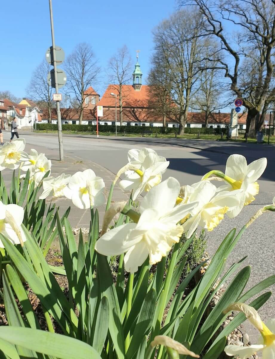 Narzissen und die Schlosskirche am alten Markt in Ahrensburg