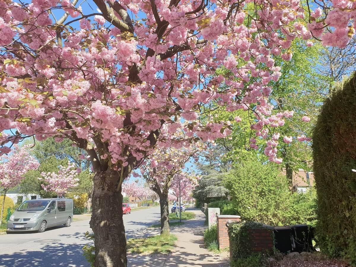 Der Rosenweg in Ahrensburg im April 2020 –Foto: Nicole Schmidt