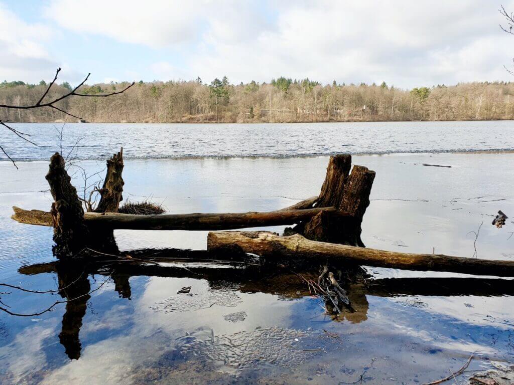 Baumstämme im Großensee – Foto: Nicole Schmidt