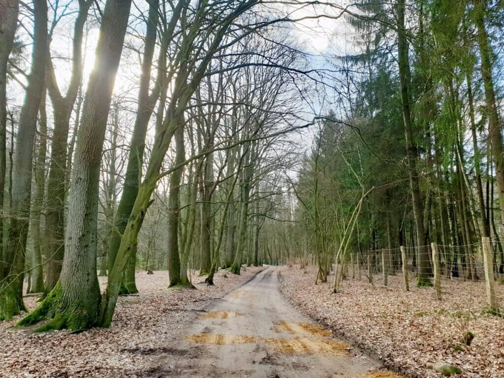 Waldweg am Großensee – Foto: Nicole Schmidt