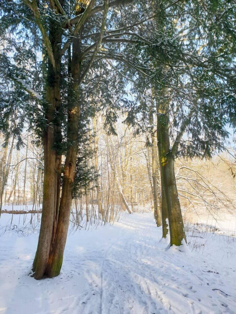 Spaziergang im verschneiten Park Manhagen – Foto: Nicole Schmidt