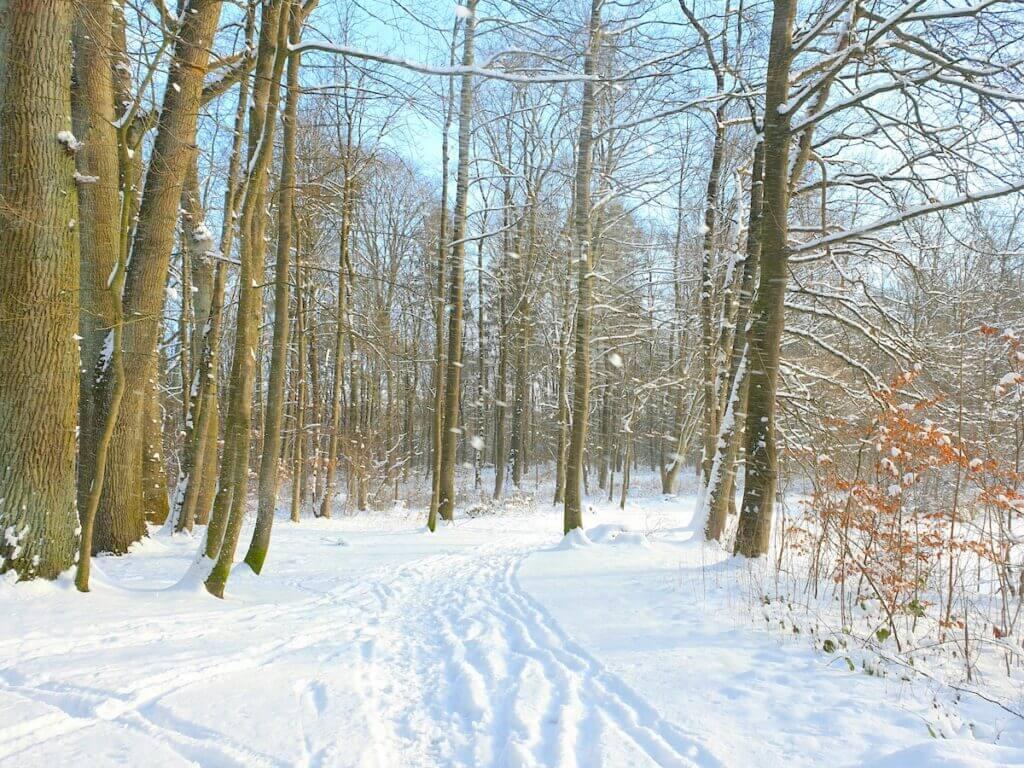 Verschneiter Weg im Park Manhagen in Großhansdorf – Foto: Nicole Schmidt