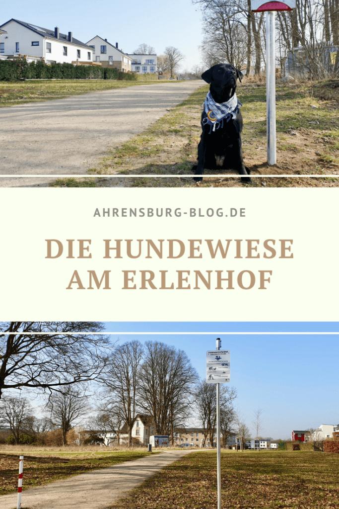 Hundeauslauf Erlenhof Ahrensburg – Foto: Nicole Schmidt