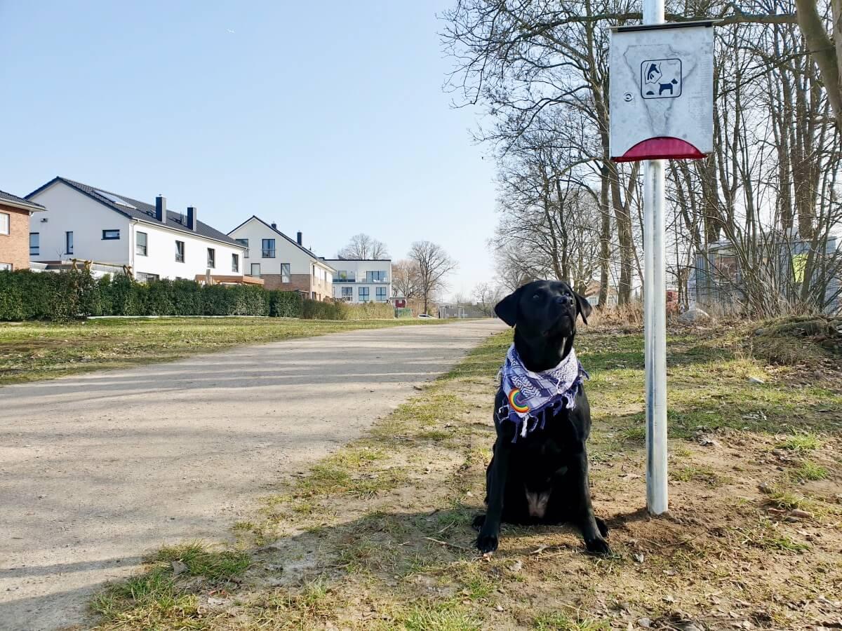 Hundewiesen in Ahrensburg und Umgebung –hier dürfen Hunde frei laufen!