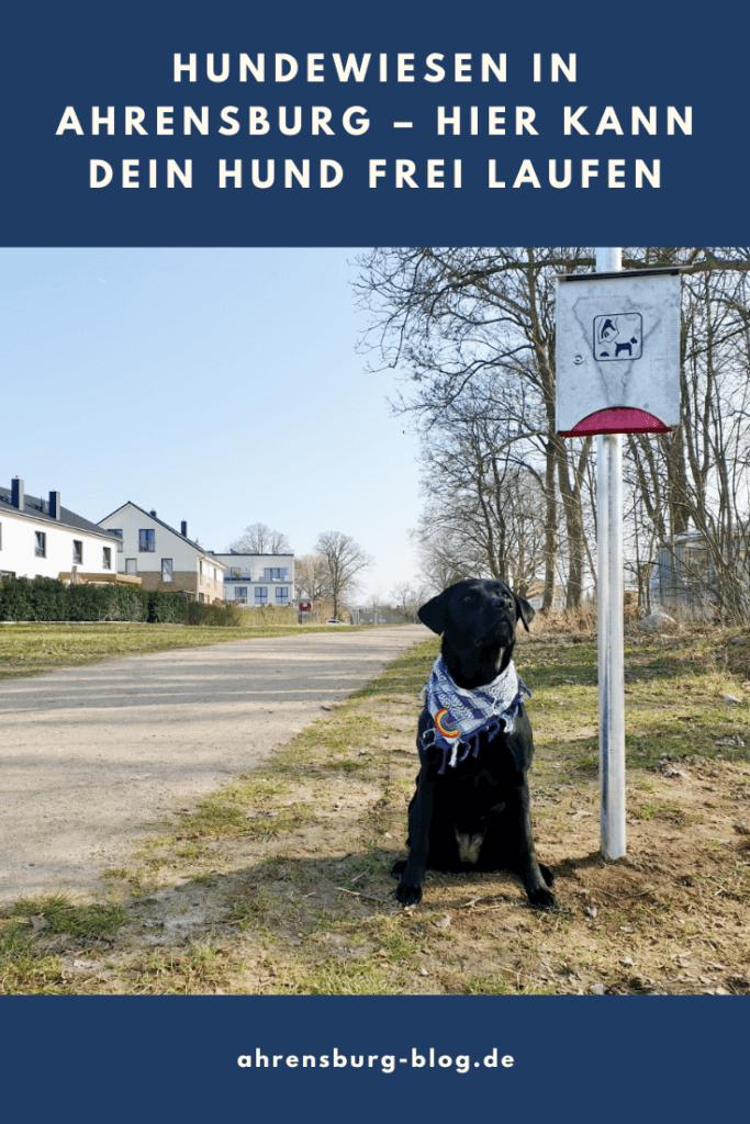 Hundewiesen in Ahrensburg – Foto: Nicole Schmidt