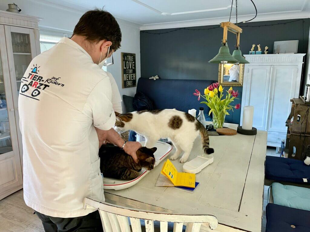 Untersuchung von zwei Katzen durch den Tierarzt auf Rädern –Foto: Nicole Schmidt