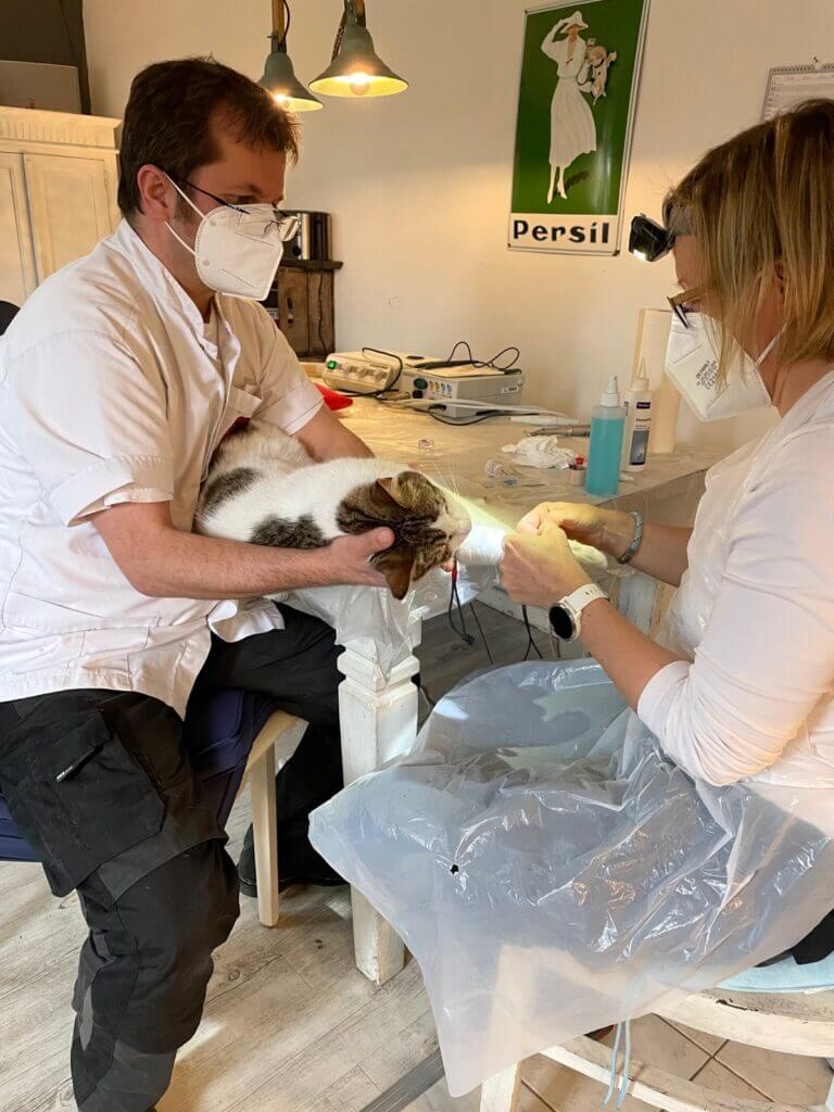 Zahnsanierung bei Kater Kalle durch den Tierarzt auf Rädern in Ahrensburg –Foto: Nicole Schmidt