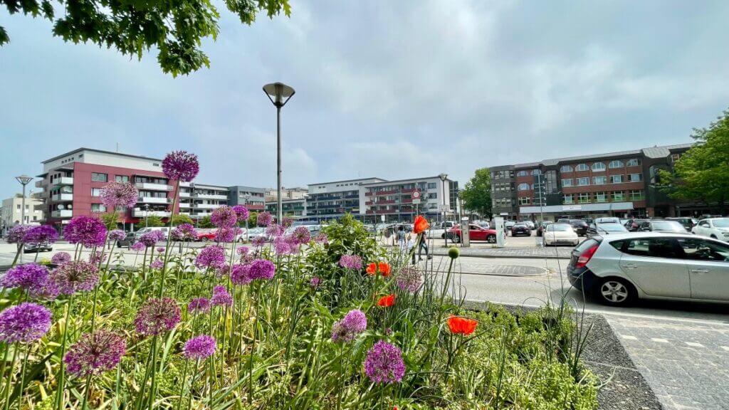 Blumen vor dem Rathaus im Juni 2021 –Foto: Nicole Schmidt