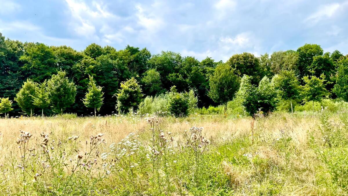 Wildblumenwiese am Erlenhof in Ahrensburg – Foto: Nicole Schmidt